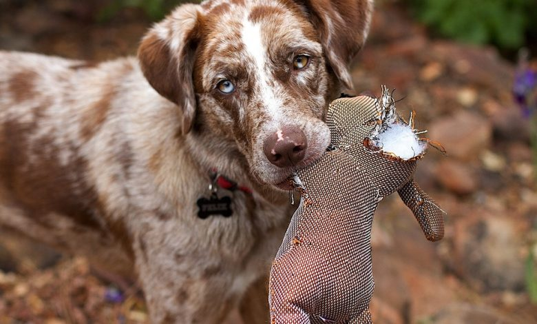 Photo of Meet The Sporting and Working Dog Groups