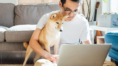 Photo of Is Online Pet Training the Future of Dog Education?
