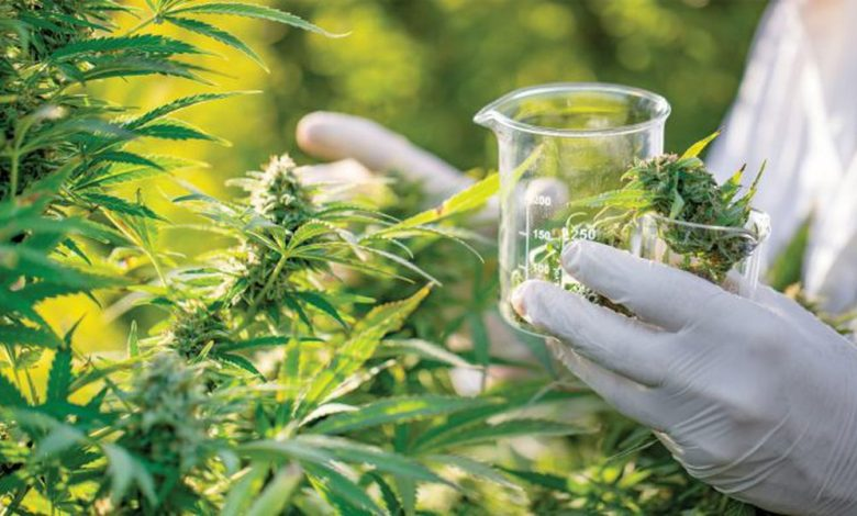 Photo of Things You Need to Know about THC and CBD